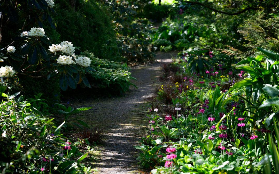The Primula Path
