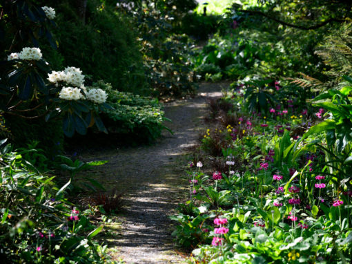 The Primula Path